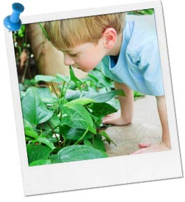 Photo of a Boy Searching in a Plant.