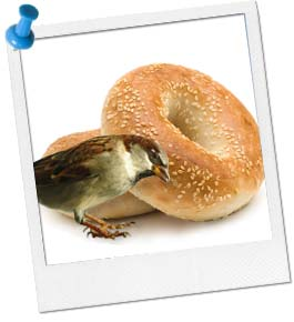 Bagel Birdfeeder Craft