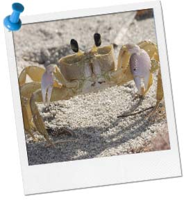 Crab Walk Races