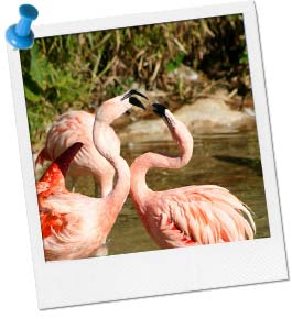 Flamingo Contest